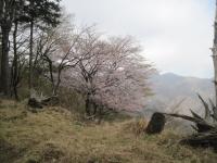 tanzawa-6.jpg